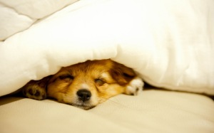 cute-dog-sleeping
