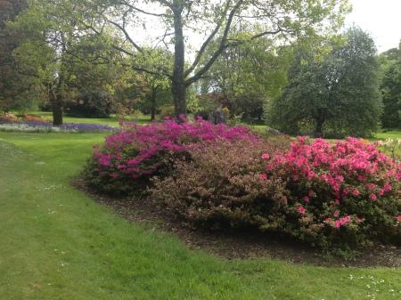 Blarney-Gardens